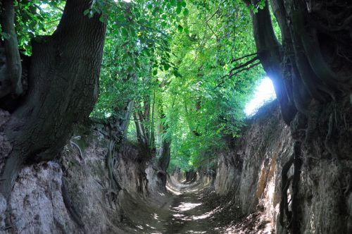 Gorge, šaknys, medžiai, augalai, miškas, atspalvis, saulė, šaknys 2