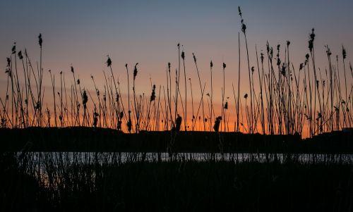 Ežeras, Saulėlydis, Vanduo, Dangus, Natūralus, Vaizdas, Vandens Kraštas, Tyla, Kraštovaizdis, Ro, Viborgas, Denmark, Pavasaris, Søndersø, Pelkė, Vakaras, Debesys