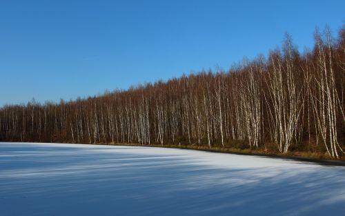 ežeras,užšalęs ežeras,sušaldyta,žiema,ledas,sniegas,žiemą,kraštovaizdis,ledo danga,beržas,beržo miškas,Hambocher ežeras,mėlynas dangus
