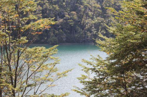 ežeras,į pietus,medžiai,argentina,patagonia,pietų argentina,gamta,kraštovaizdis