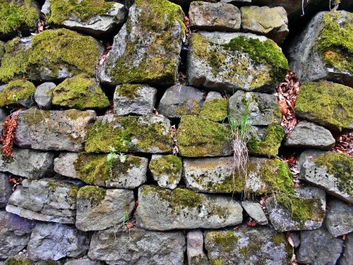 akmeninė siena,ežero dusia,samanos,akmenys,senas,samanos,miškas,kalnai,sąskaita faktūra,gamta,žalias,užaugo