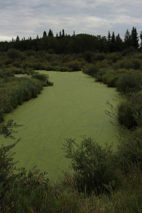 ežeras, tvenkinys, skalda, žalias, dumbliai, ežero tvenkinys sunaikinti žalius dumblius