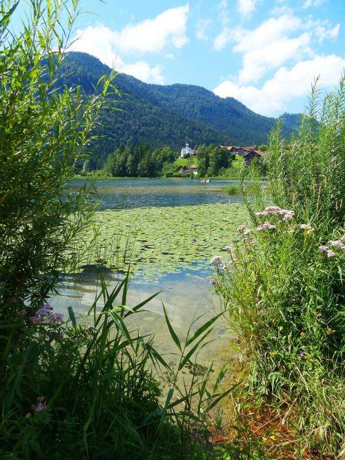 ežeras weissensee,ežeras,vandenys,vandens lelijos,vakarinis bankas,bendruomeninis ežeras,kaimo ežeras,Allgäu,ekskursijos paskirties vieta,füssen,vasara,laisvalaikis,gamta,atsigavimas,kraštovaizdis