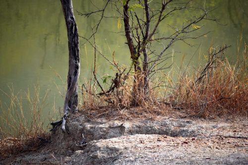 ežeras, tvenkinys, vanduo, medžiai, lapija, gamta, ežero medžiai 1