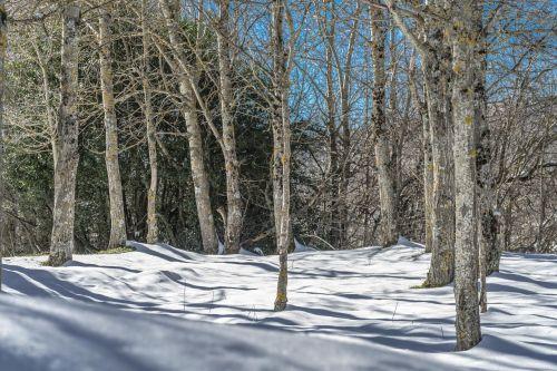 kraštovaizdis,nevado,sniegas,snieguotas kraštovaizdis,žiema,gamta,Nevada,kalnas,balta,šaltas,snieguotas kelias,medžiai,kalnų peizažas,snieguotas kalnas