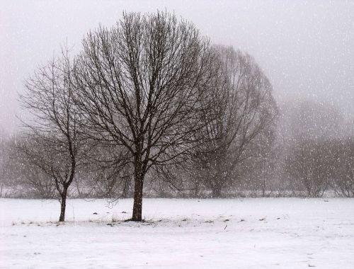 Kraštovaizdis, Žiema, Šaltas, Debesuota Oras, Oras, Žiemos Oras, Medžiai, Sniegas, Žiemą, Gamta, Parkas, Snaigės, Sniegas