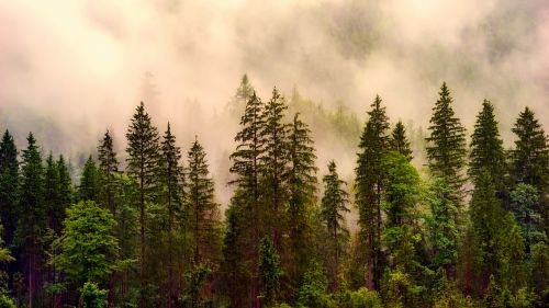kraštovaizdis,miškas,medžiai,miškai,saulėtekis,rytas,dangus,debesys,gamta,lauke,dykuma,Šalis,kaimas,kaimas
