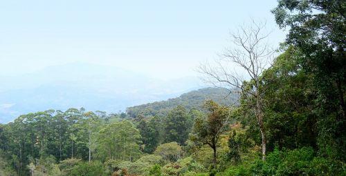 kraštovaizdis,peizažas,loolecondera,delta,Šri Lanka,ceilonas