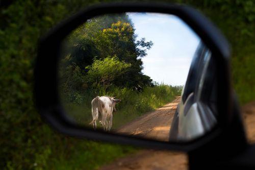 kraštovaizdis,gamta,menas,gamtos kraštovaizdis,Urugvajus,natūralus,turizmas