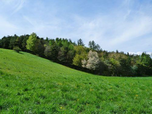 kraštovaizdis,gamta,kalnų ganyklos,kalvos,laukai,miškas,dangus,prairie,žalias kraštas,pavasaris,kreivės,kontrastas,pilnumas