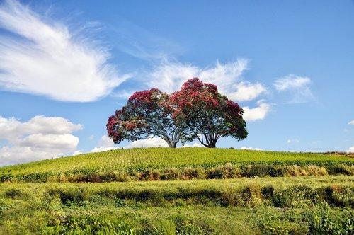 kraštovaizdis, medis, žalias, Mount, medžiai, pobūdį, natūralus kraštovaizdis, miškas, bagažinė, parkas, kalnų kraštovaizdis, dangus, laukas, Žiemos, šešėliai, augalų, alpinizmas, horizontas, debesys