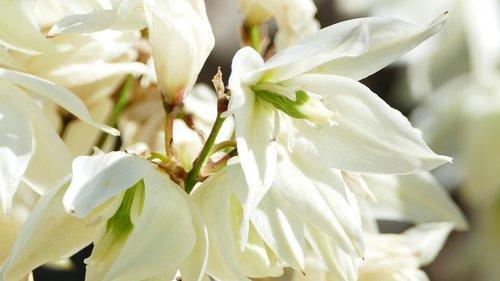 kraštovaizdis, pobūdį, gėlės, baltos spalvos, visi baltos spalvos, saulė, šviesa