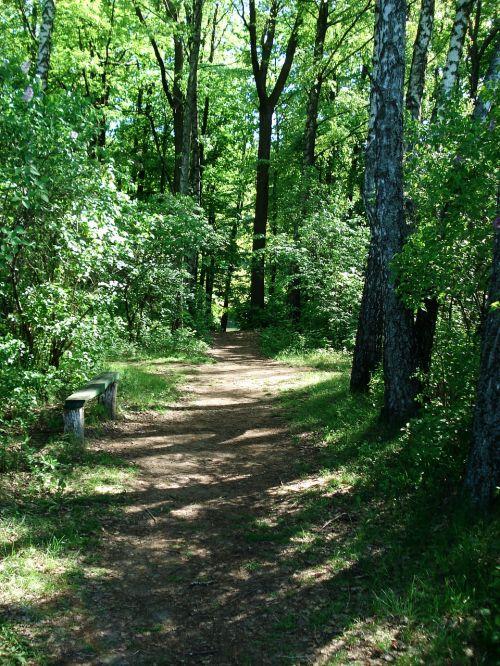 kraštovaizdis,gamta,pėsčiųjų takas,takas,miško takas,parkas,žalias,kelias,kelias,mediena,medinis