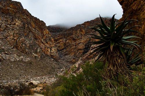 kraštovaizdis, pobūdį, kalnai, kalvos, nuotaika, medis, lauko, Žiemos, rūkas, lauke, žalias, atmosfera, šaltis
