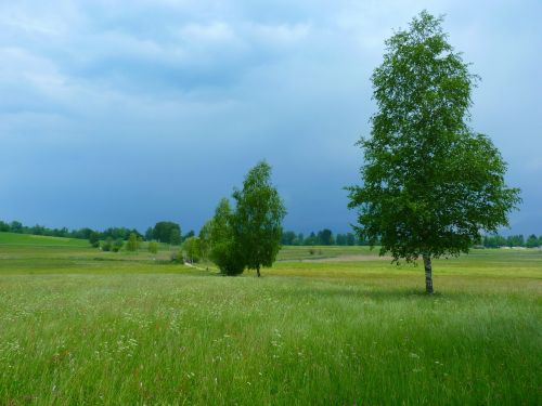 kraštovaizdis,medžiai,gamta,gewitterstimmung