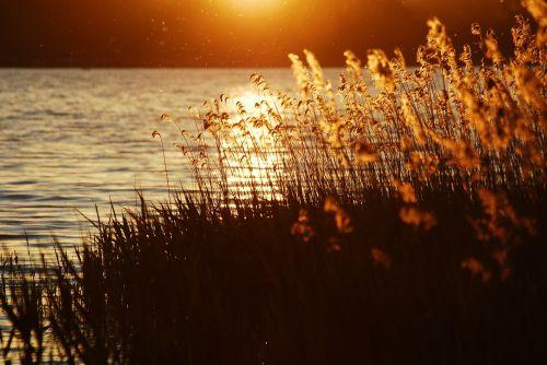 kraštovaizdis,nuotaika,ežeras,gamta,vanduo,dangus,rami atmosfera,vaizdingas,vasara,atmosfera,tylus,saulė,nendrė,atgal šviesa,saulėlydis,romantiškas,siluetas,afterglow,abendstimmung,šventė,atmosfera,atsipalaiduoti,atsipalaidavimas,vakarinis dangus,saulės šviesa,meditacija,poilsis