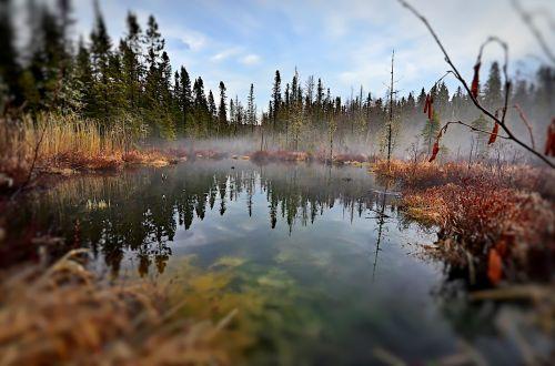 Kraštovaizdis,  Pelkės,  Gamta,  Vanduo,  Medžiai,  Dangus,  Québec