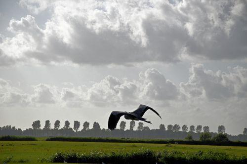 heronas, paukštis, gyvūnas, gamta, skristi, kraštovaizdis, panorama, kraštovaizdis
