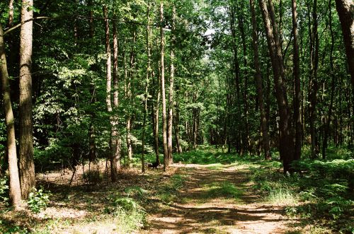 miškas, kelias, medis, Lenkija, miško priemiestis Lenkija