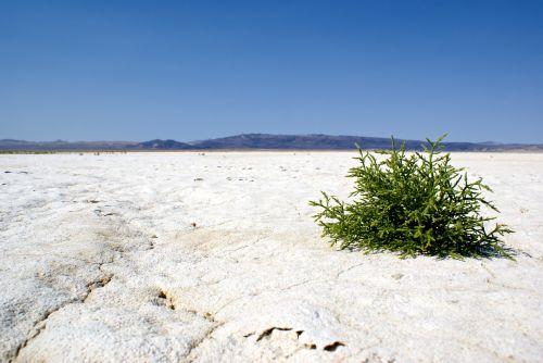 sausas, klimatas & nbsp, pakeisti, krekingo, žemė, tuščia, aplinka, butas, žalias, žemė, šiluma, karštis & nbsp, banga, karštas, negyvas, atviras, supakuotas, pan, druska, druska & nbsp, butas, druska & nbsp, vasara, balta, baltos ir smėlio smėlio, platus, platus & nbsp, atidarytas, paskutinis gyvenimas druskos plokščia