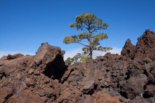 lava,lava rock,lavos laukai,rieduliai,mėnulio kraštovaizdis,Tenerifė,teide,Nacionalinis parkas,lavos srautas,Karg,šaltas,Trist,bazaltas,tamsi,ruda,pušis,canary kiefer,pinus canariensis,kontrastas,mirtis,gyventi