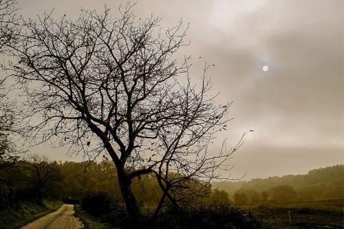 lazio,Roma,italy,romėnų kaimas,rūkas,migla,žiema,kraštovaizdis,dangus,plikas medis,siluetas