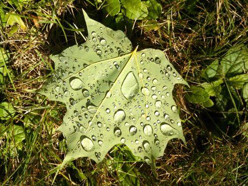 lapai,vandens lašeliai,didinimas