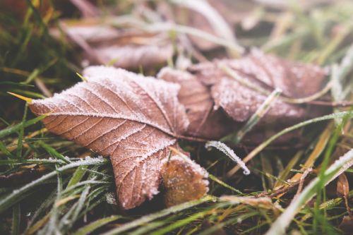 lapai,kritimas,žalias,žolė,lauke,gamta,laukas,lauke,sniegas