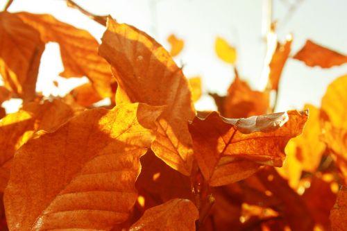 lapai,kritimas,ruduo,saulėtas