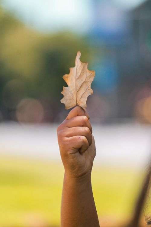 lapai,geltona,ruduo,gamta,sausas lapas,geltonieji lapai,aukso ruduo,geltonas lapas,džiovinti lapai,negyvi lapai,geltonas lapas,medis