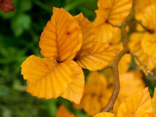 lapai,lapai,rudens lapai,apelsinų lapai,kritimo lapai