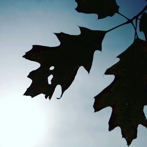 lapai,lapai,ruduo,džiovinti lapai,gamta,sausas lapas,lapija,medis,tekstūros lapai,sodas,sezonai,žiemos lapai,medžiai,rudens miškai,geltonas lapas,filialai,rudas lapas,raudonas lapas