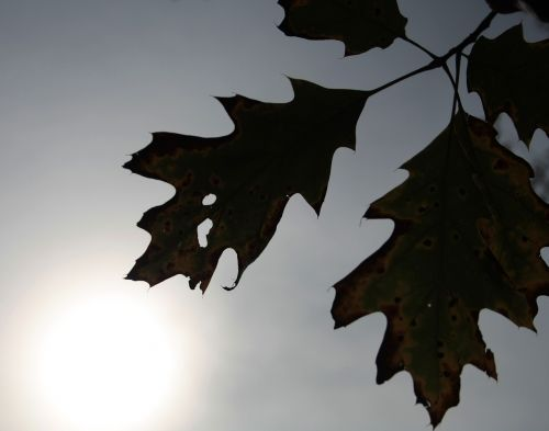 lapai,lapai,ruduo,augalas,džiovinti lapai,gamta,sausas lapas,žalias,rudas lapas,lapija,medis,tekstūros lapai,sodas,sezonai,raudonas lapas,žiemos lapai,rudens miškai,medžiai,geltonas lapas