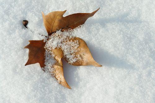lapai,sniegas,žiema,Nevada,snieguotas kelias,šaltas,kraštovaizdis,ledas,vaikščioti,medžiai,snieguotas kraštovaizdis,balta,gamta