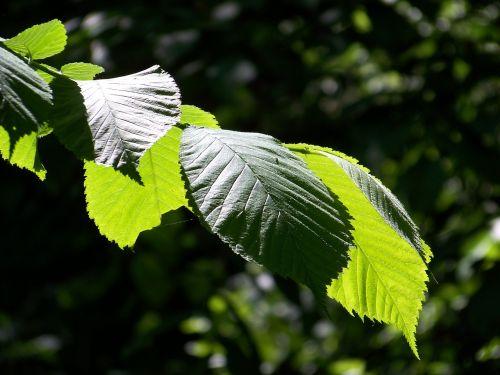 lapai,miškas,gamta,sprigas