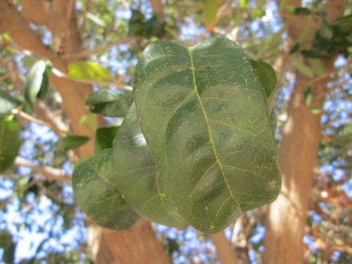 makro, augalas, gamta, lapai, augmenija, lapų makro 28