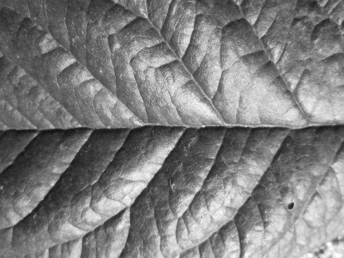 lapai, tekstūra, makro, augalas, fonas, lapo tekstūros makro 4