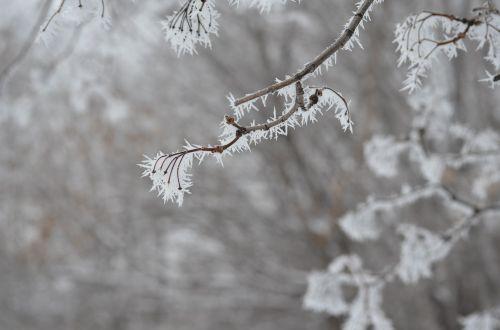 leann,kraštovaizdis,žiema,rime,šaltas,sniegas,šaltis,Rusija,gamta,šaltas miestas,medžiai