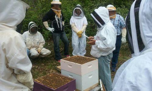 bitės, medus, bitininkystė, avilys, aviliai, bitininkas, medus & nbsp, bitė, mokytis apie bitininkystę