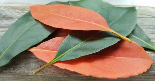 lapai,kritimas,kritimo spalvos,ruduo,kritimo lapai,spalvos,oranžinė,žalias,kontrastas,išdėstyti,išsibarsčiusios,nesuderinta,penki