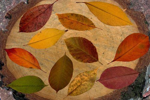lapai,medžių lapai,ruduo,medžių lapai,kritimo lapai,sausas,nuotaika,kompozicija,spalvinga,išdėstymas,lapija,dizainas