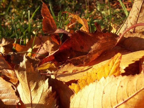 lapai,geltona,ruduo,saulėtas,diena