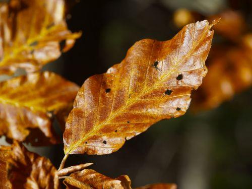 lapai,kritimas,rudens lapas,negyvas lapelis,gamta,medžių lapai,spalva,lapija,rudens lapai,lapai,geltona