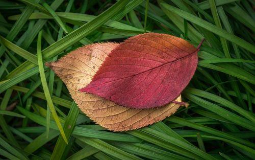 lapai,ruduo,augalai,lapai,lapai,rudens lapai,gamta,raudona,ruda,žalias,tekstūra
