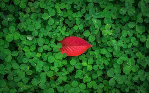 lapai,rudens lapai,ruduo,žolė,šaukštas,dobilas,sėkmės,baseinas,augalai,lapai,lapai,gamta,žalias,raudona,abstraktus