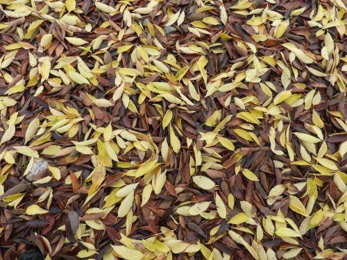 lapai,negyvi lapai,krentantys lapai,kilimų lapai,ruduo,geltonieji lapai