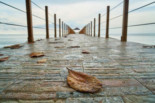 lapai,kraštovaizdis,tiltas,iskele,sausas lapai,gamta,augalas,gražus,fonas,lapai yra,dangus,makro,taika,grožis,debesis,ruduo