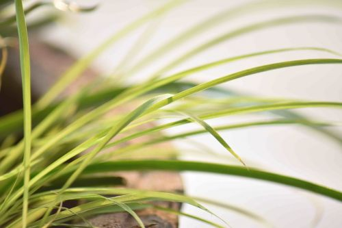 lapai,ilgai,augalas,puodą,žaluma,makro,per eksponuotos,filtruotas,Indija