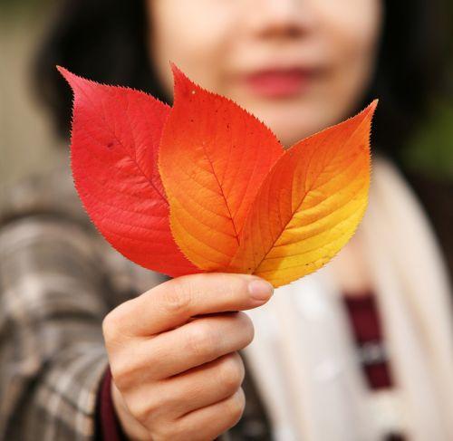 lapai,ruduo,rudens lapai,lapai,gamta,lapai,raudonas klevas,klevo lapas,takas