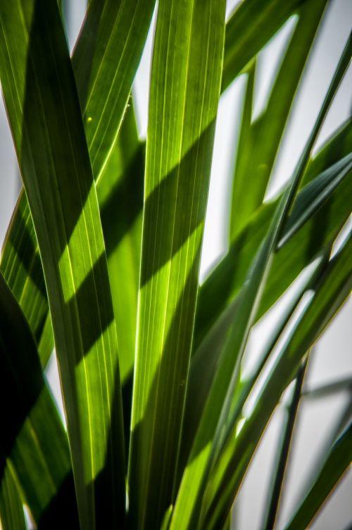lapai,žalias,šešėlių žaidimas